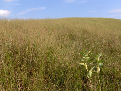 prairie at Oak Valley WMA, Nebraska