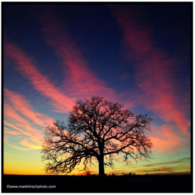 January 19, 2013. Day 302. Photo by Mark Hirsch. https://www.facebook.com/photosofthattree