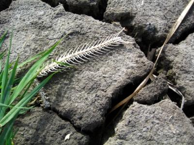 fish bones on creek bed