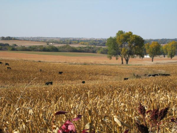 Farm near Lincoln, Nebraska.