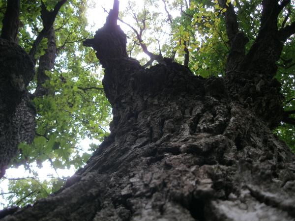 Same tree.