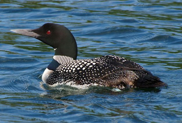 Loon, Wisconsin. Wikimedia Commons
