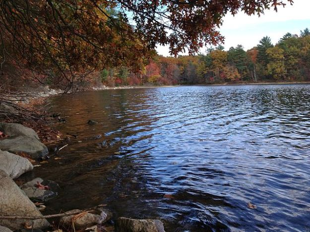 Walden shoreline in fall. Taken near hiking trail and former site of Thoreau's cabin. Wikimedia Commons