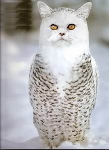 Cat owl, via Snopes.com