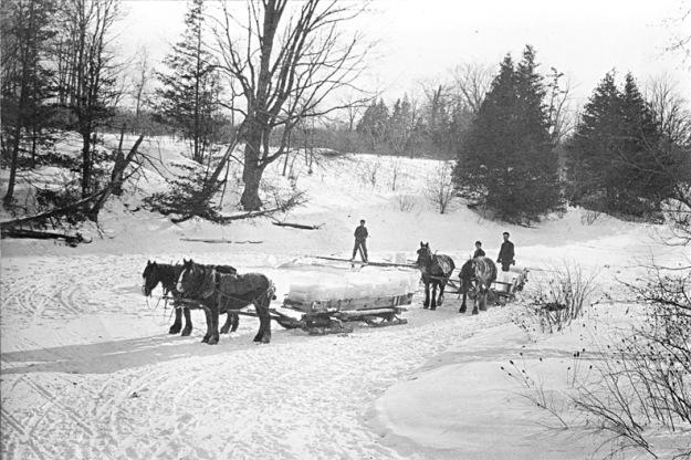 Hauling ice to storage, Toronto, 1890s. Wikimedia Commons