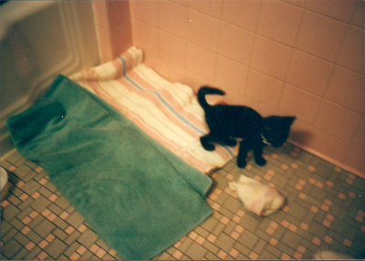Boo the day we found her, August 10, 1997.